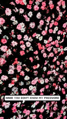 cute, flowers, wallpaper, don',t touch my phone - image #2919043 by ...