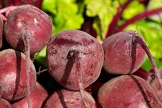 Organic Red Beet Root Seeds NON GMO Garden Vegetable Salad Greens Natural Juice Cleanse Open Pollinated Untreated Root Vegetables, Growing Vegetables, How To Store Beets, Beets Health Benefits, Alga Wakame, Col China, Liver Detoxification, Pickled Beets, Vegetables