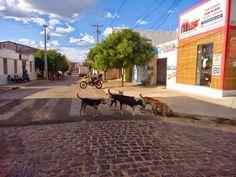 Sem canil, cachorros perambulam pelas ruas de Monteiro