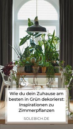 Die 117 besten Bilder von Zimmerpflanzen – Ideen für die ...