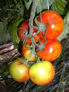 Compost, Solar, Organic, Plant, Composters
