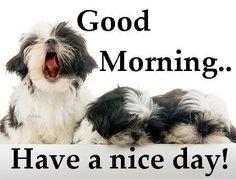 Good morning Shih Tzu lovers.
