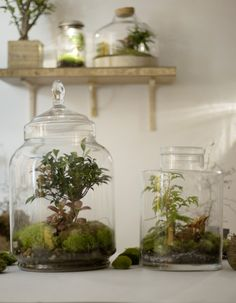 Un terrarium avec un bocal en verre ! ♻ - - A terrarium with a glass jar! ♻ By Green Factory Indoor Garden, Indoor Plants, Home And Garden, Terrarium Diy, Green Factory, Diy Jardim, Terraria, Elle Decor, Planting Flowers