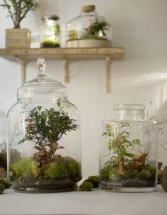 Après être tombé dans l'oubli pendant des années, le terrarium fait son grand retour. Nécessitant peu d'entretien, il est la touche green parfaite qui manquait à notre intérieur. On apprend donc illico à le faire homemade avec Noam, passionné de plantes vertes et fondateur de Green Factory*, nouvel atelier boutique spécialisé dans les jardins de verre. http://www.elle.fr/Deco/News-tendances/Tendances/DIY-notre-mode-d-emploi-du-terrarium-2867104
