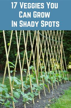 Veggies you can grow in shadyspots Welcome to my WOMEN OVER 40 GARDENING Board plants garden vegetables flowers dirt herbs perennial #
