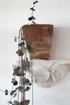 pianta grassa con piccole foglioline pendenti - Cerca con Google