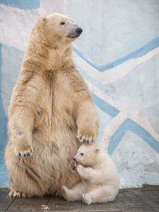 «Перерыв на обед». Новосибирский зоопарк. Автор фото — Андрей Поляков: nat-geo.ru/photo/user/50663/