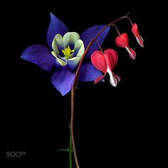 SOLIDARITY… Flowers by Magda Indigo on 500px