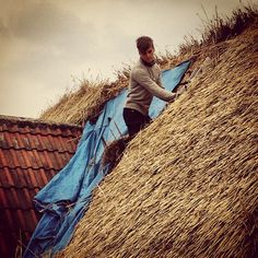 Thatcher Joe. Thatching....... no words can explain how much i love this pic