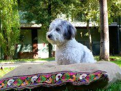 Gatos Cats, Dog Beds, Facebook, Dogs, Animals, Toss Pillows, Beds, Animales, Animaux