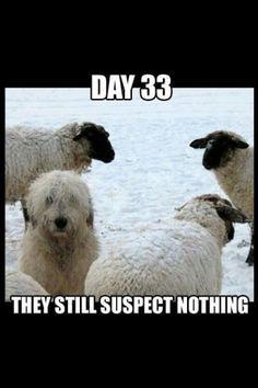 #stoppuppymills LOL funny!
