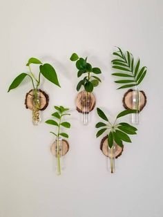 Walnut Wall Coin with Test Tube Room With Plants, House Plants Decor, Plant Wall Decor, Hanging Plants, Indoor Plants, Hang Plants On Wall, Plants On Walls, Indoor Plant Wall, Propogating Plants