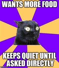 chronic anxiety cat meme - photo #12