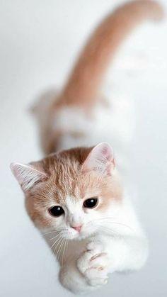 Naughty Teen mačička pics