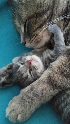 sweet dreams in Mum's arms