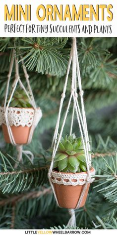 These mini succulent pots are a cute way to display your tiny plants. This DIY craft project is quick and easy and creates the most adorable hanging planter ever. They also make adorable Christmas tree ornaments! Perfect for the gardener, or someone w Hanging Succulents, Succulents In Containers, Succulents Diy, Succulent Pots, Hanging Planters, Christmas Plants, Christmas Tree Ornaments, Christmas Diy, Garden Ornaments