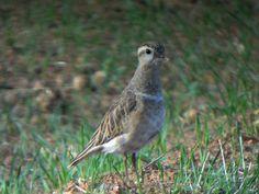 Loja Wildlife, Granada Province, Spain. Granada, Spain, Wildlife, Birds, Animals, Animales, Grenada, Animaux, Sevilla Spain