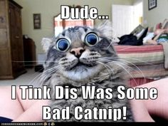 Dude...I tink dis was some bad catnip!