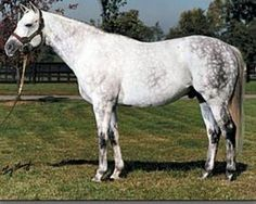 Black Tie Affair(1986)Miswaki- Hat Tab Girl By Al Hattab. 5x5x5 To Nasrullah. 45 Starts 18 Wins 9 Seconds 6 Thirds. $3,370,694. Won 1991 BC Classic(G1), Iselin H(G1), Stephen Foster H, Commonwealth S, Twice In 1990 & 1991.  U.S. 1991 Champion Older Horse & Horse Of The Year.