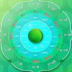 Wachst du nachts oft zur selben Zeit auf? Geht es dir nachmittags plötzlich schlecht? Schau auf die Uhr - und dann auf die Organuhr. Sie verrät mehr über deine Gesundheit.