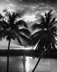 Sunset coming through the palms, yacht gliding right through the sun.   May, 1952.  By Wallace Kirkland.