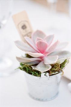 succulent wedding - brides of adelaide magazine - decor
