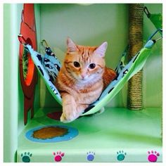 cat hammock with your interior design and paint