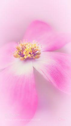 by Oltea #nature #photooftheday #amazing #picoftheday