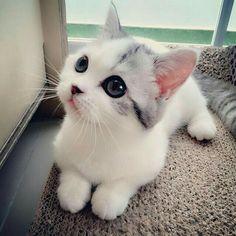 White gorgeous kitty