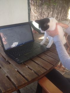 computer literate cat