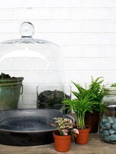 14 Best Terrarium Images Terrarium Ideas Closed Terrarium Plants