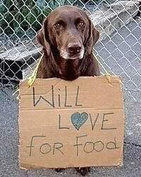 awh. sad. this belongs on one of those damn sad animal abuse commercials.