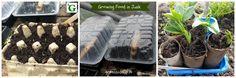 Grow Your Own Vegetables in Junk #irishblogs