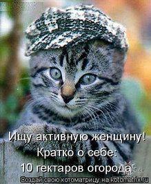 Фото Коты и кошки
