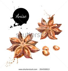 Find Kitchen Herbs Spices Banner Vector Illustration stock images in HD and millions of other royalty-free stock photos, illustrations and vectors in the Shutterstock collection. Herbs Image, Image Fruit, Food Tattoos, Herb Art, Vegetable Illustration, Food Sketch, Watercolor Fruit, Kitchen Herbs, Food Painting