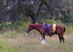 Florida Cracker Cur - Bing Images