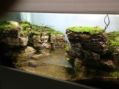 Vivarium I think I would put a bridge across. Aquarium Terrarium, Aquarium Aquascape, Planted Aquarium, Reptile Terrarium, Mini Terrarium, Nature Aquarium, Vivarium, Paludarium, Aquascaping