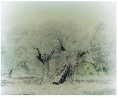 Ori Gersht - Olive Tree