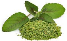 Das Indische Basilikum wird auch Tulsi genannt. Tulsi Basilikum wird in seiner ursprünglichen Heimat manchmal in Form eines Basilikum-Stängels um den Hals getragen oder an den Hauseingängen gepflanzt. Gleichzeitig wehren die ätherischen Öle des Basilikums Stechinsekten ab, so dass die Pflanze gleich in mehrfacher Hinsicht schützt.