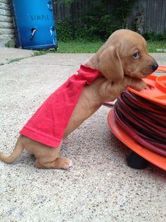 Super pup.