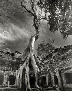 Beautiful dark twisted fantasies: the world's most ancient trees – in pictures Rilke's Bayon, Cambodia, 2007