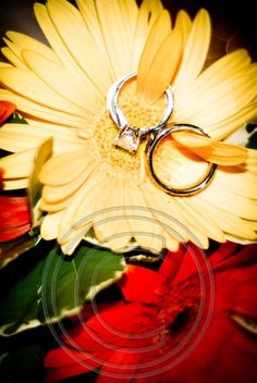 wedding rings #photography
