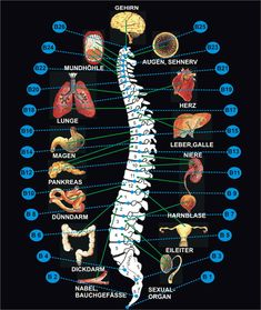 The 3 treatment levels - corresponding therapy 2 Informations About Die 3 Behandlungsstufen - korrespondierende Therapie 2 Pin You can easily use my p Body Chart, Acupressure Treatment, Spine Health, Reflexology Massage, Medical Anatomy, Massage Tips, Human Anatomy And Physiology, Kundalini Yoga, Yoga For Weight Loss