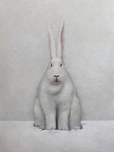 """white hare"" | shao fan"