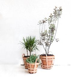 Indoor plants ; planter ; leather ; straps ; Gardenista.  byAMT x Mimot Studio's Strap Planters.