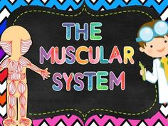 Engage your students and involve them into learn about the Muscular System. Here you will find:-38 slide PowerPoint: Functions of the Muscular System, facts, types of muscles, structure of a muscle and how to look after the muscular system.  Every part finishes with H.O.T.S.