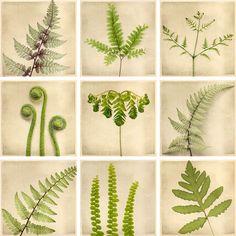 cool fern botanical print ideas