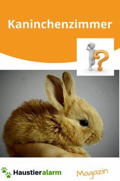 Rabbit, Animals, Bunnies, Animales, Bunny, Rabbits, Animaux, Animal, Animais