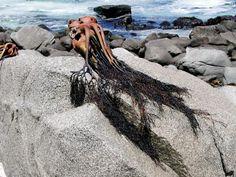 seaweed shot by Inga Maria Krebs Bade