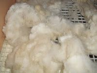 Washing raw fleece